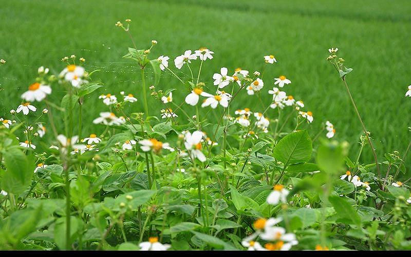 cau chuyen hoa xuyen chi