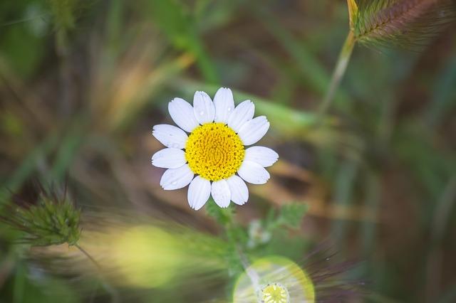 hoa cuc dep